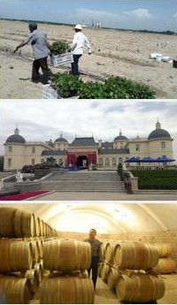 gwoc china winery visits