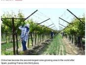 BBC story OIV China vineyards