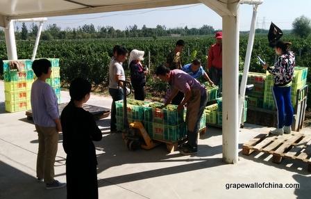 kanaan winery visit for ningxia winemakers challenge