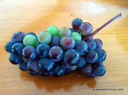 aglianico grace vineyard shanxi china
