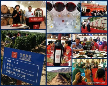 Collage of official launch of Tiansai in Xinjiang, part of a new wave of wineries focused on quality, which starts with carefully setting up the vineyards.