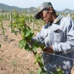 Huailai Amethyst Manor Winery Hebei China 怀来紫晶庄园