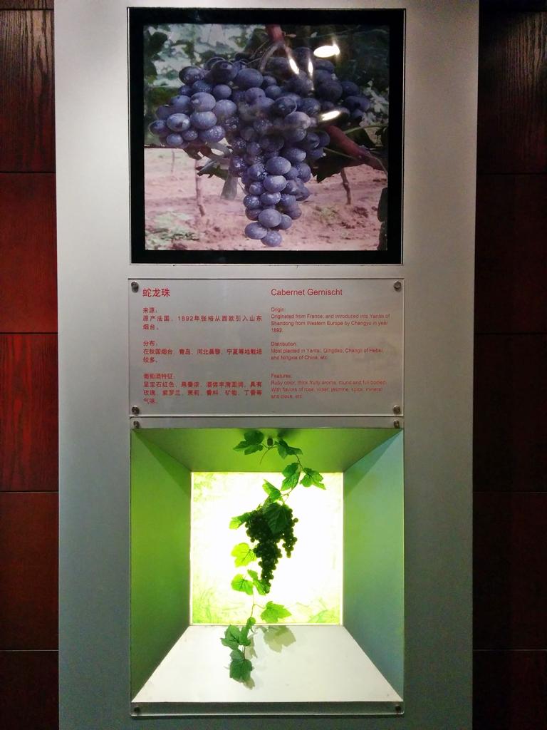 Changyu Moser Flashback S 2015 14