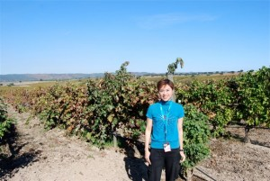 grape-wall-of-china-wine-word-rebecca-leung-21