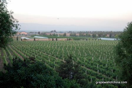 grace vineyard shanxi wine china (16)
