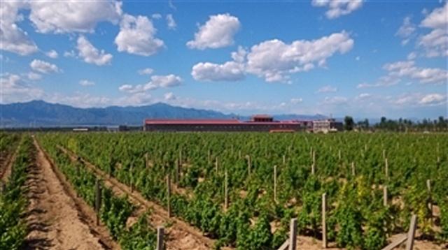 amethyst manor winery huailai hebei 2
