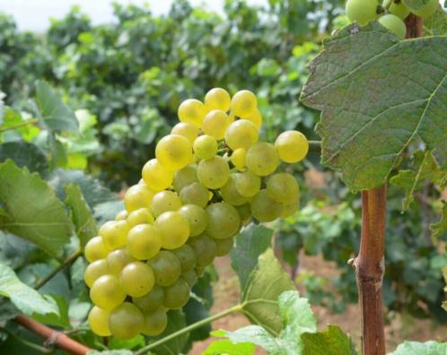 amethyst manor winery huailai hebei 5